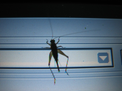 bug-on-screen